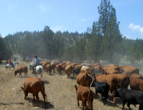 Head 'Em Up, Move 'Em Out! An Oregon Cattle Drive Story