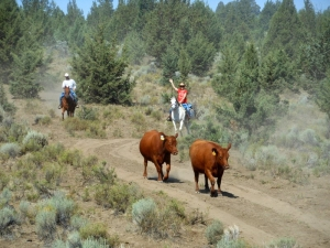 9 reasons to vacation at a guest ranch