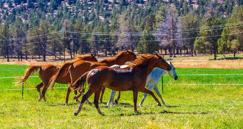 Horse FAQ's Long Hollow Ranch - Dude Ranch Vacations Activities