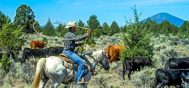 Long Hollow Ranch - Dude Ranch Vacations Activities