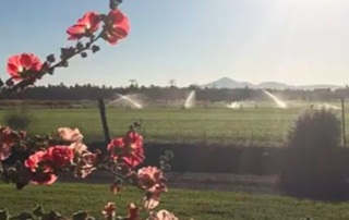 spring at long hollow ranch in sisters oregon